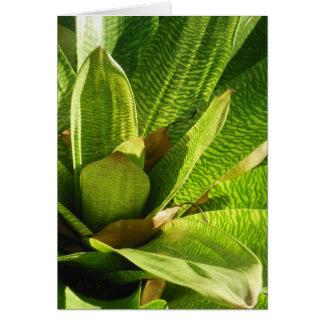 Hawaiian Bromeliad Card