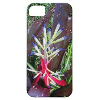 Hawaiian Bromeliad iPhone SE/5/5s Case