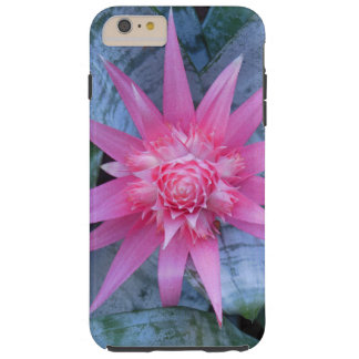 Hawaiian Bromeliad Tough iPhone 6 Plus Case