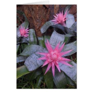 Hawaiian Bromeliads Card