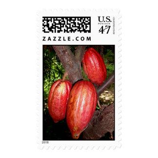 Hawaiian Cacao Pods Postage