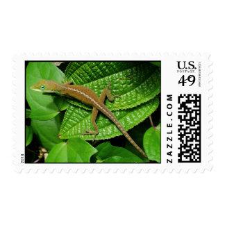 Hawaiian Chameleon Postage