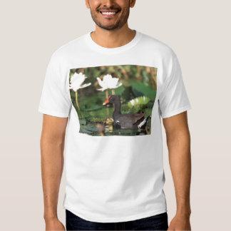 Hawaiian Common Moorhead T-Shirt