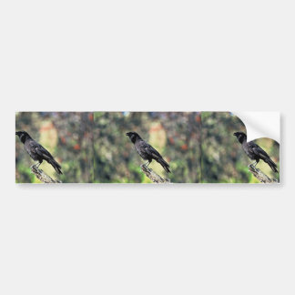 Hawaiian Crow Bumper Stickers