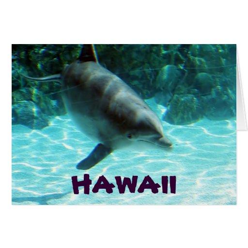 Hawaiian Dolphin card