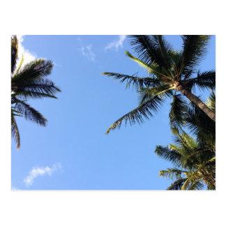 Hawaiian Exotic Beach Palm Trees Postcard