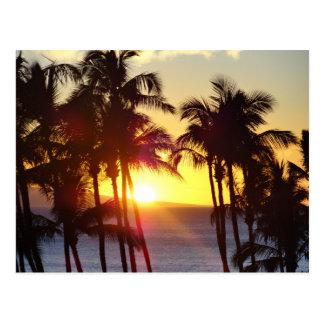Hawaiian Exotic Beach Palm Trees Sunset Postcard