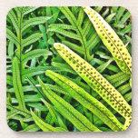 Hawaiian Fern Coaster