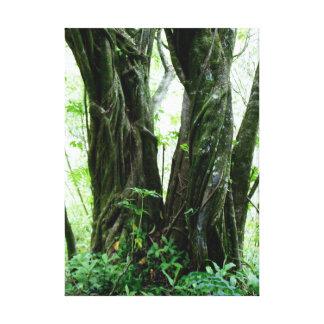 Hawaiian Fig Trees Canvas Print