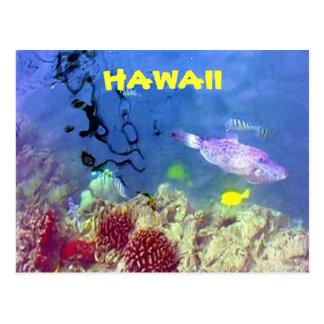 Hawaiian Fish Postcard