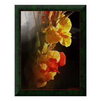 Hawaiian Flame Flowers Poster