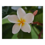 Hawaiian floral poster