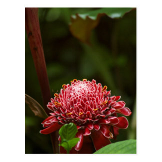 Hawaiian Flower Post Cards