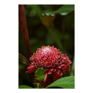 Hawaiian Flower Poster - Perfect for ANY wall!