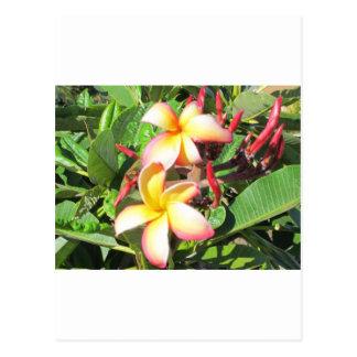 Hawaiian Flowers - beautiful yellow blossoms Postcard