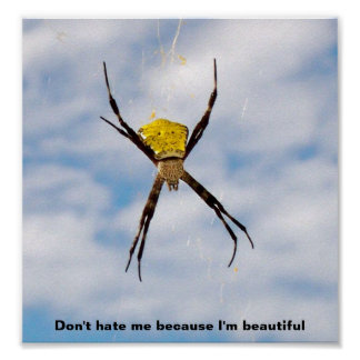 Hawaiian Garden Spider Poster