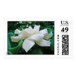 Hawaiian Gardenia Postage Stamps