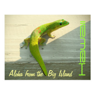 Hawaiian gecko postcard greeting