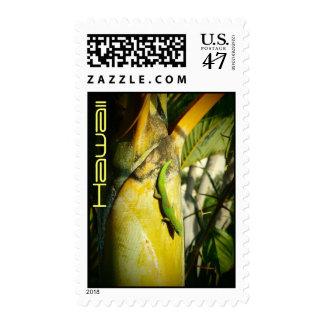 Hawaiian gecko tropical postage stamps