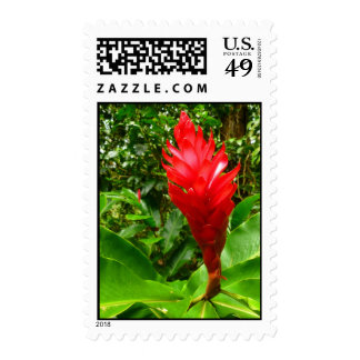 Hawaiian Ginger Postage Stamps