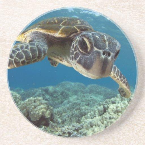Hawaiian Green Sea Turtle Beverage Coaster