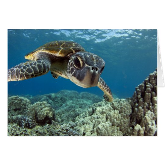 Hawaiian Green Sea Turtle Card