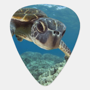 Hawaiian Green Sea Turtle Guitar Pick