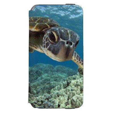 Hawaiian Green Sea Turtle iPhone 6/6S Wallet Case