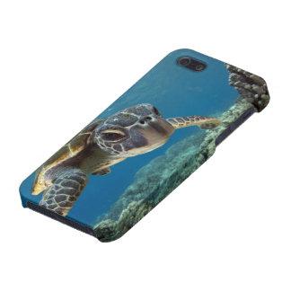 Hawaiian Green Sea Turtle iPhone 5/5S Cover