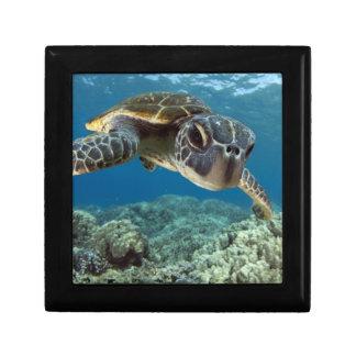 Hawaiian Green Sea Turtle Jewelry Box