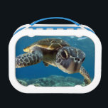 """Hawaiian Green Sea Turtle Lunch Box<br><div class=""""desc"""">A Hawaiian gree sea turtle investigates his reflection in my dome port. &#169; and &#174; Bigstock&#174; - All Rights Reserved.</div>"""