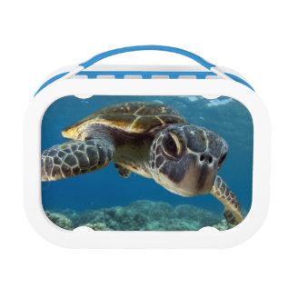 Hawaiian Green Sea Turtle Lunch Box at Zazzle