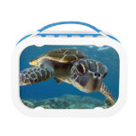 Hawaiian Green Sea Turtle Yubo Lunch Box
