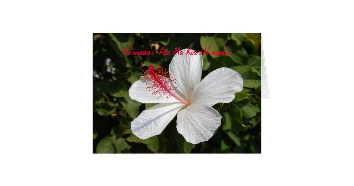 Hawaiian Happy Anniversary White Hibiscus Card Zazzle