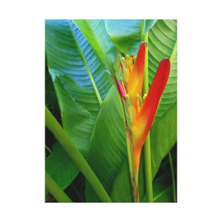 Hawaiian Heliconia Stretched Canvas Print