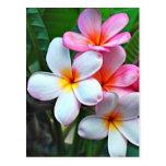 Hawaiian Hibiscus Flower postcard