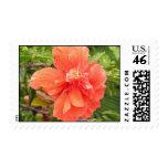 Hawaiian Hibiscus Postage Stamp