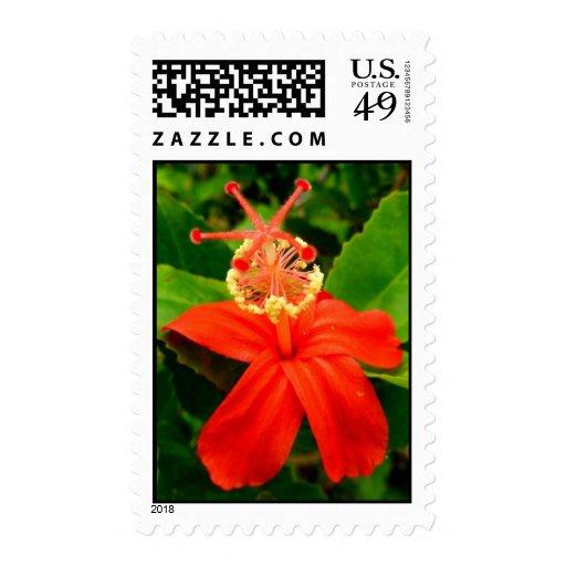 Hawaiian Hibiscus Stamps