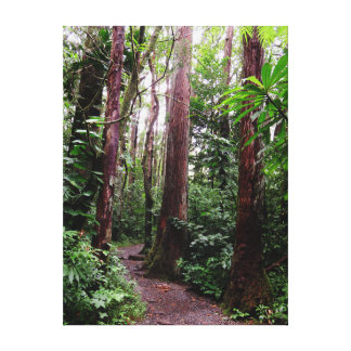 Hawaiian Hiking Trail Canvas Print