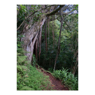 Hawaiian Hiking Trail Poster