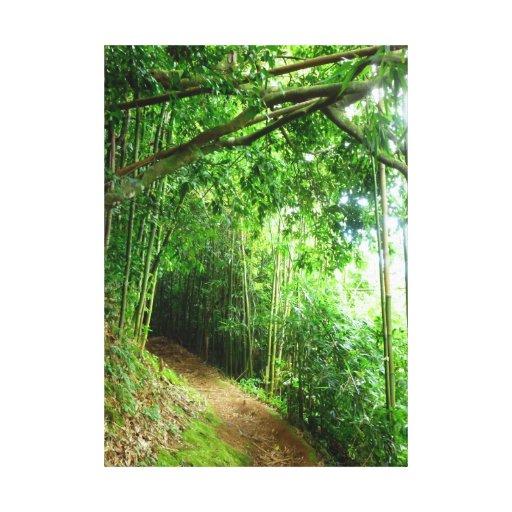 Hawaiian Hiking Trail Stretched Canvas Prints