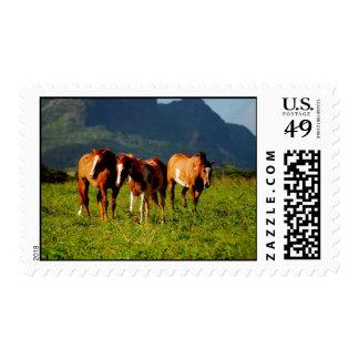 Hawaiian Horses Postage