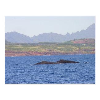 Hawaiian Humpback Whales Post Cards