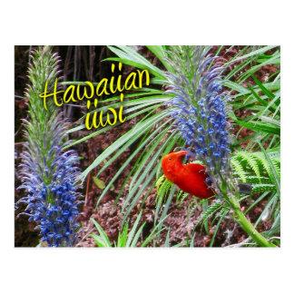 Hawaiian iiwi bird feeding on Lobelia grayana Post Card