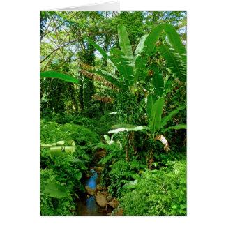 Hawaiian Junge Stream Card