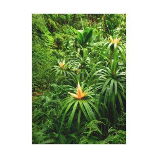 Hawaiian Jungle Trail Canvas Print