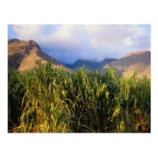 Hawaiian Landscape Postcard