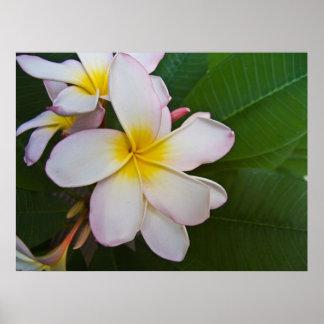 Hawaiian Lei flower Poster