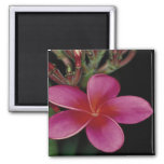 Hawaiian Magnet 2 Inch Square Magnet
