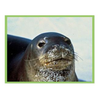 Hawaiian Monk Seal Postcard